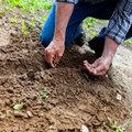 Comment semer toute l'année, part 1