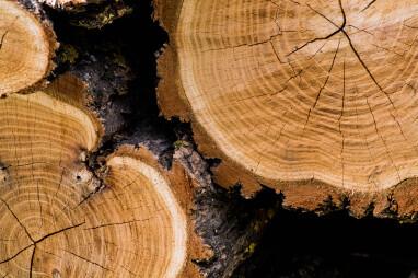 Natürliche Risse und Sprünge im Holz