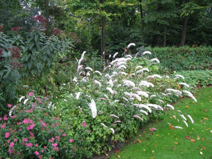 acheter plantes en ligne acheter plantes m dicinales en. Black Bedroom Furniture Sets. Home Design Ideas