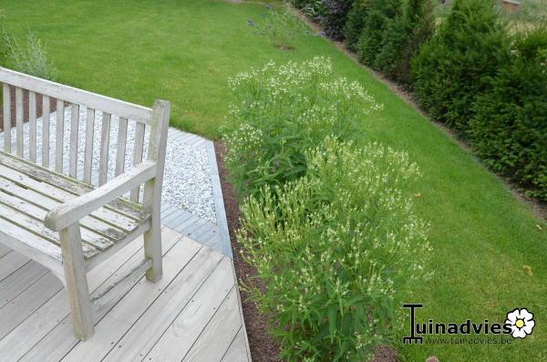 verbena hastata 39 white spires 39 kaufen pflanzen kaufen. Black Bedroom Furniture Sets. Home Design Ideas