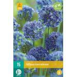 Allium caeruleum - Zierlauch (15 stück)