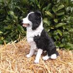 Reproduction d'un Border Collie adulte
