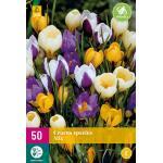 Krokus Botanische Mischung (50 stück)