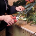Leseschere Felco 310 - Blumen und Früchte