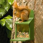 Eichhörnchen Futterhaus grün