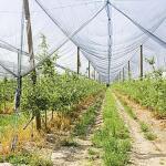 Hagelnetz 2 x 10 Meter - grün