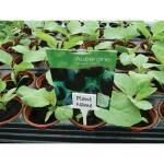 Pflanzenschilder mit Schlitz als Namensschilder für Pflanzen (10 stück)