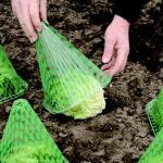 Pflanzenglocke - Sonnenschutz (10 stück)