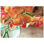 Blumenerde Orchidee 6 l