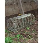 Fangkorb für mehrere Ratten