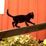 Silhouette d'un chat très joueur