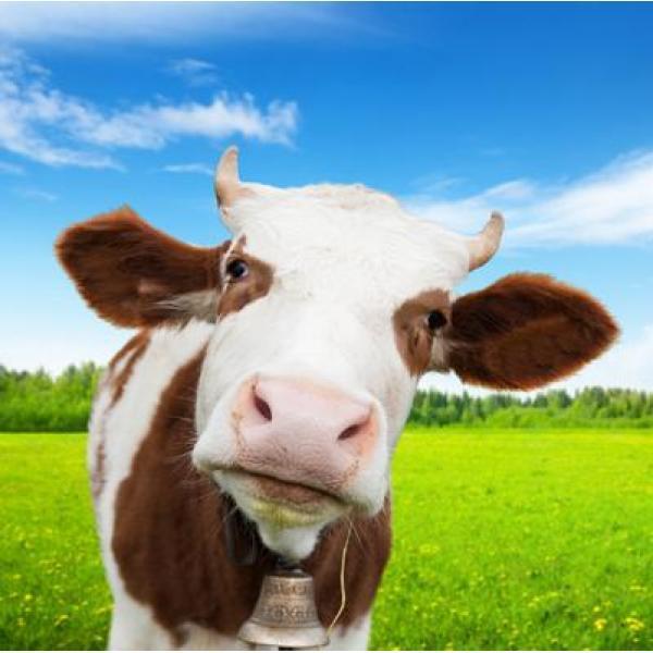Toile de jardin avec motif de vache - poster en textile | Posters ...