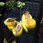 Futterschale für Schmetterlinge