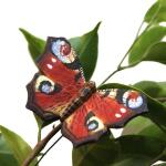 Schmetterlingsmagnet Tagpfauenauge