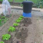 Bewässerungssystem mit 20 Tropfe