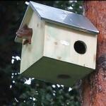 Nichoir en bois naturel pour écureuils
