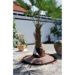 Wurzelschutz Palmen gegen Frost